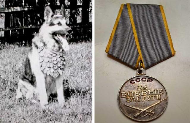 Героический пес Джульбарс