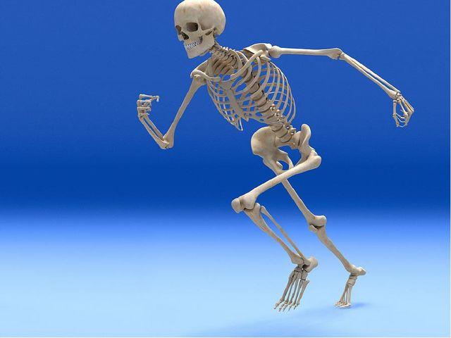 Каркас тела – скелет